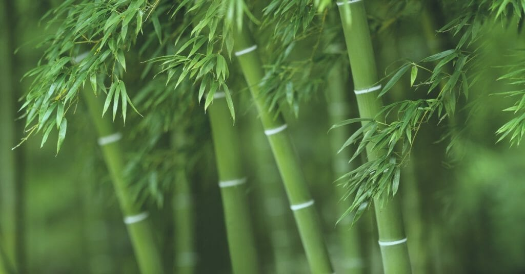 bamboo benefits and uses