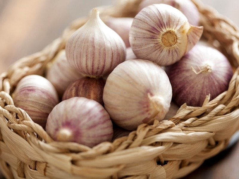 What Is Chinese Garlic