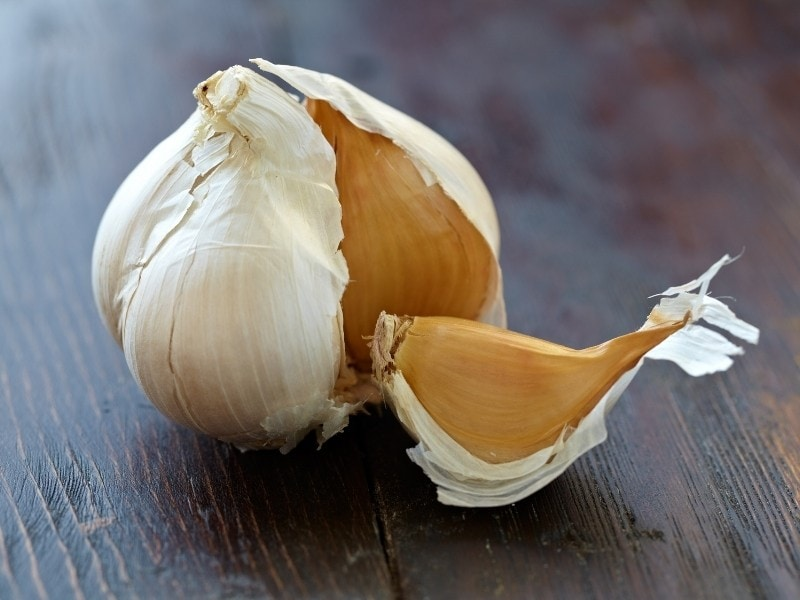 What Is Elephant Garlic