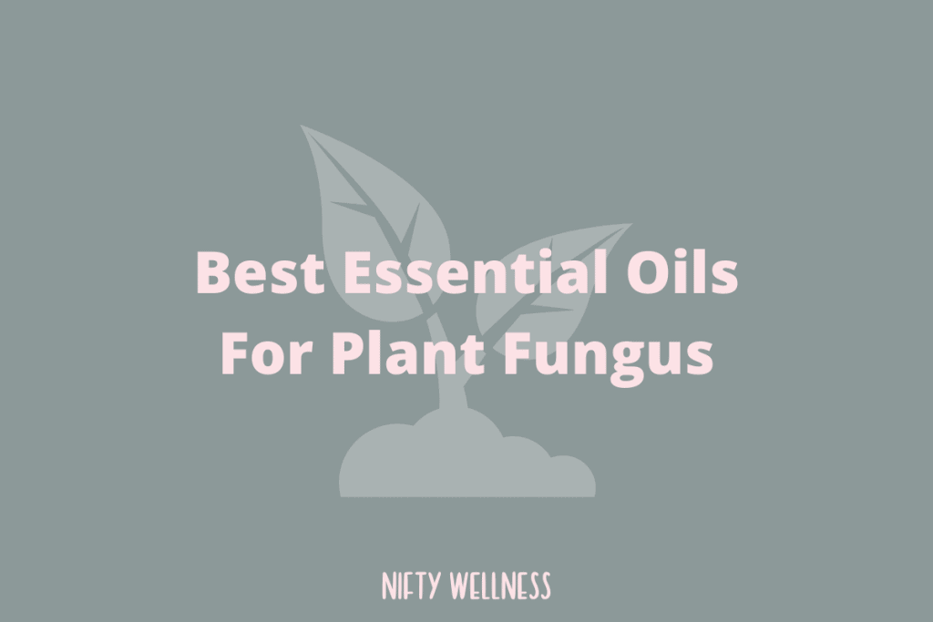 Best Essential Oils For Plant Fungus