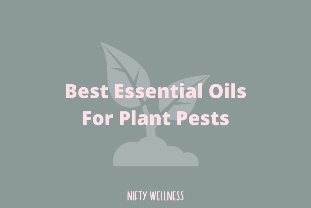 Best Essential Oils For Plant Pests