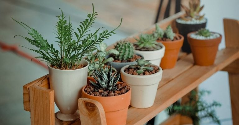 essential oils for plants